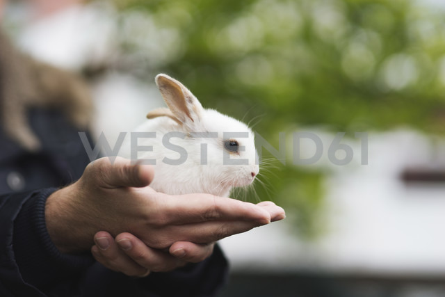 Little hare sitting on hand - CHPF000230