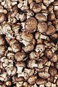 Crimini mushrooms - BZF000314