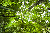 Thailand, trees in the rainforest seen from below - GIOF001311
