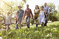 Extended family walking with picnic baskets in meadow - RBF004787