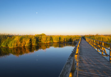Germany, Baden-Wuerttemberg, Swabia, Upper Swabia, Bad Buchau, Lake Feder, wooden boardwalk in the morning - SIEF007070