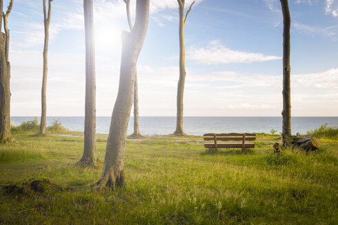 Germany, Nienhagen, Baltic Sea, Gespensterwald, bench in the morning - RJF000607