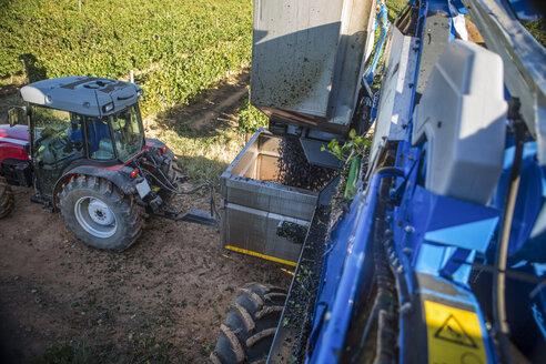 Grape harvesting machine and tractor in vineyard - ZEF009326