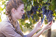 Woman in vineyard taking picture of grapes - ZEF009338
