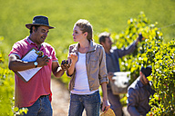 Man and woman in vineyard examining grapes - ZEF009350