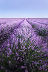 France, Provence, lavender fields - EPF000127