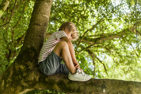 Little boy sitting on a tree in the forest - TCF005031