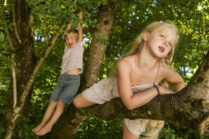 Little boy and his sister climbing on a tree in the forest - TCF005034