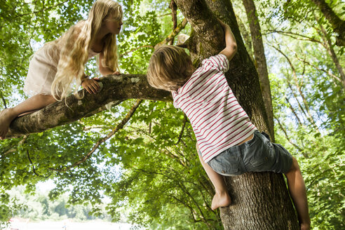 Little boy and his sister climbing on a tree in the forest - TCF005040