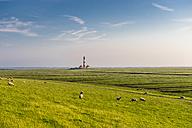 Germany, North Frisia, Westerheversand Lighthouse with sheep on meadow - EGBF000142