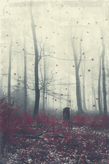 Winter forest and fog - DWIF000766