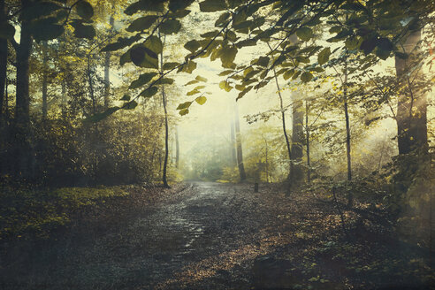 Deciduous forest in summer, forest path and early-morning haze - DWIF000772