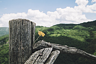 Bulgaria, flower In wood, wooden fence - BZF000347