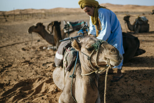 Berber man preparing camels for travel - KIJF000697