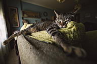 Tabby cat relaxing on couch - RAEF001408