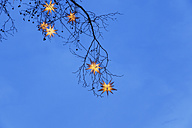 Lighted Christmas stars hanging in branches - GW004868