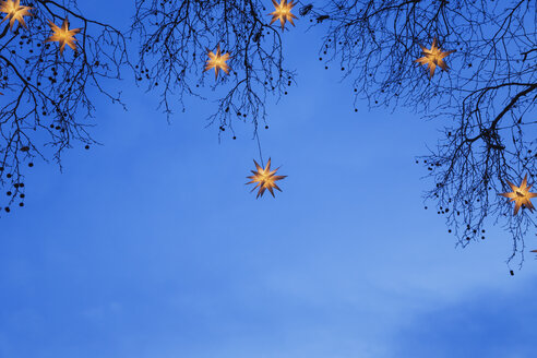 Lighted Christmas stars hanging in branches - GW004871