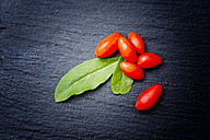 Goji berries and leaves on slate - CSF027568