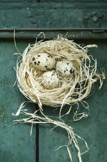 Easter nest with three quail eggs - ASF005978