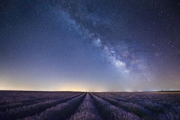 France, Provence, Lavender fields with milky way at night - EPF000132