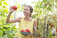 Happy woman looking at harvested tomato in a greenhouse - KNTF000447