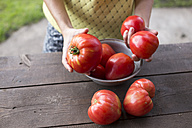 Woman's hands holding tomatoes - KNTF000453