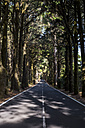 Spain, Tenerifa, empty road, forest - SIPF000782