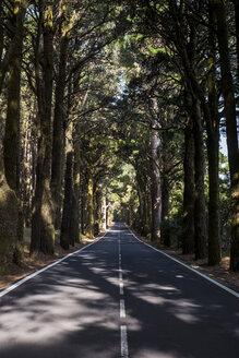 Spain, Tenerifa, empty road, forest - SIPF000782