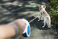 Woman taking her dog for walkies - MAUF000831