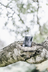Cell phone on a branch - KNSF000365