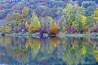 Colourful autumn forest at lake - WGF000941
