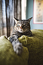 Tabby cat relaxing on couch - RAEF001440