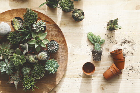 Cactus and succulents on wood - RTBF000263