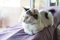 Cat looking through window - SKCF000170
