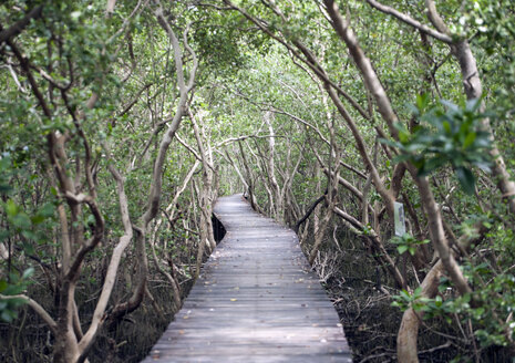 Thailand, Phetchaburi Province, wood path through mangrove forest - ZCF000402