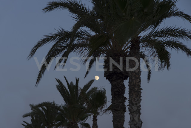 Spain, Bahia de Mazarron, Moon between palm trees at dusk - SKCF000174