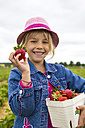 Portrait of proud little girl holding box and strawberryies on a strawberry field - JFEF000809