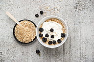 Wholemeal quinoa, popped quinoa with yogurt and blackberries - MYF001751