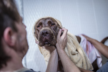 Brown dog being washed - ZEF009821
