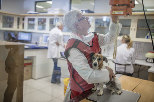 Woman getting a dog ready for x-rays - ZEF009830