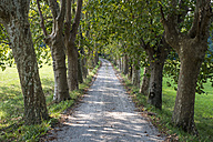 Italy, treelined road - SIPF000823