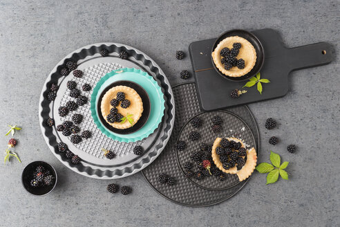 Tartlets and blackberries - MYF001755