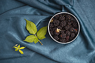 Bowl of blackberries - MYF001758