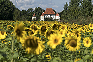 Germany, Munich, Obermenzing, view to Blutenburg Castle with sunflower field in the foreground - PC000271