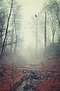 Germany, Wuppertal, Forest at end of winter - DWIF000789