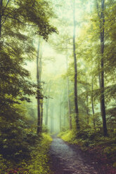 Germany, Wuppertal, Morning sun in the forest - DWIF000792