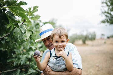 Portrait of happy little boy picking figs with his great-grandfather - JRFF000860