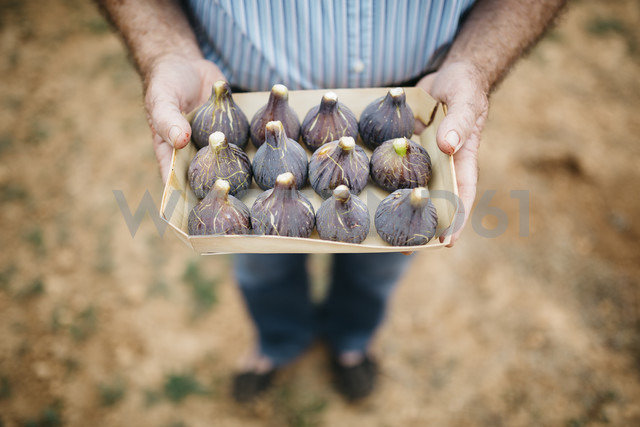 Senior man holding cardboard box of fresh figs - JRFF000863 - Josep Rovirosa/Westend61
