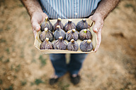 Senior man holding cardboard box of fresh figs - JRFF000863