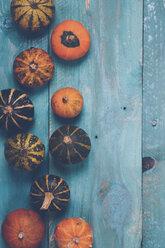 Ornamental pumpkins on blue wood - RTBF000333